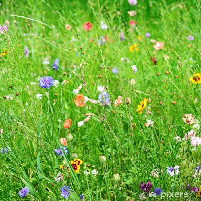 Naklejka Pixerstick Dzikie kwiaty - Pory roku