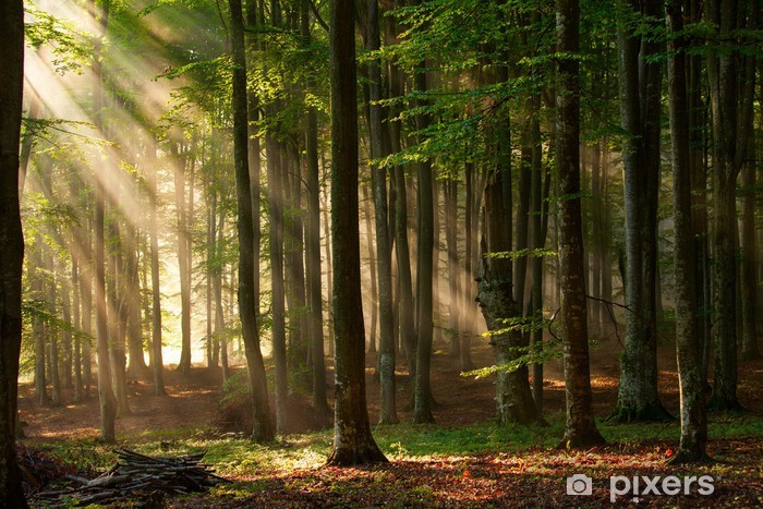 Fototapeta winylowa Promyki słońca przebijają się przez las - Tematy