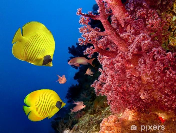 dd102ac754 Papier peint Les récifs coralliens et les poissons papillons masqués ...