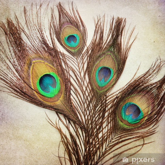 Vintage background with peacock feathers Pixerstick Sticker - Textures