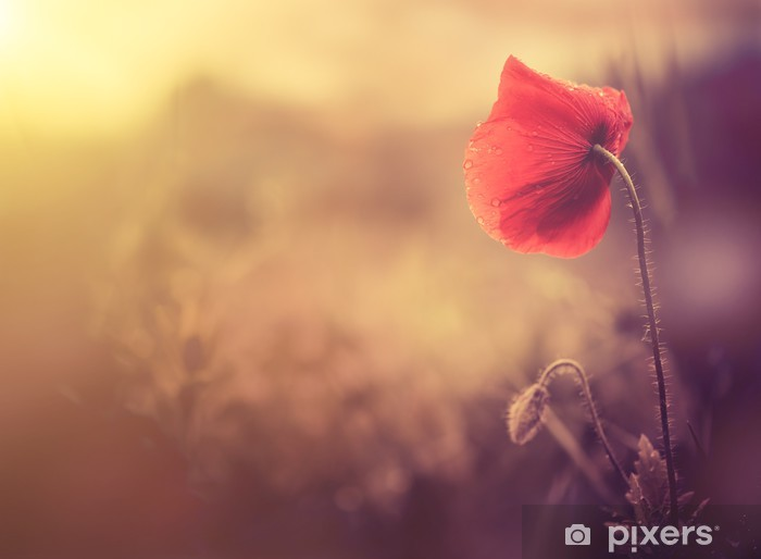 Vinilo Pixerstick Flor de la amapola silvestre - Destinos