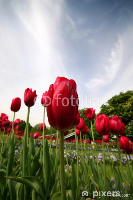 Nálepka Pixerstick Červené tulipány v parku. - Květiny