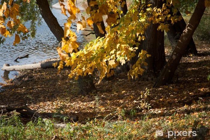 Naklejka Pixerstick Jesienne drzewa na brzegu jeziora - Inne pejzaże