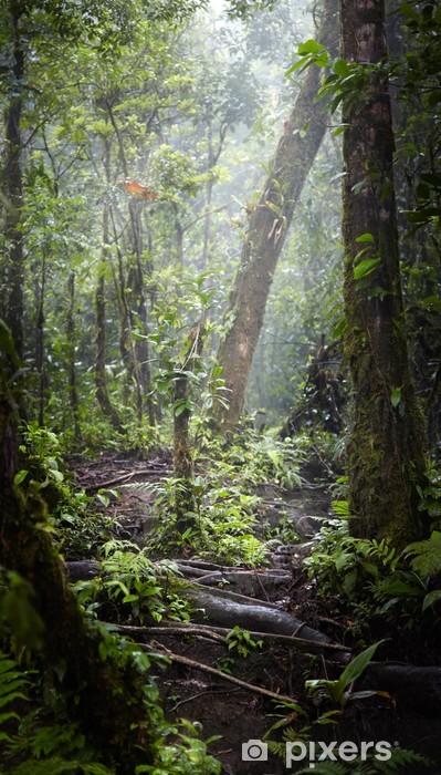 Vinyl Fotobehang Bomen in een bos, Costa Rica - Overige
