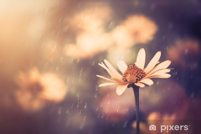 Vinyl Fotobehang Gele zomer bloem onder zonsondergang licht - Bloemen