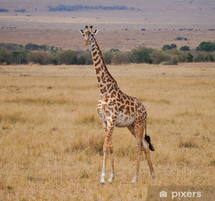 Poster Girafe - Thèmes