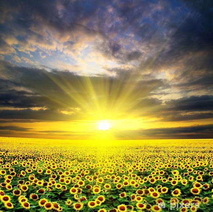 Pixerstick Sticker Sunflowers - Thema's