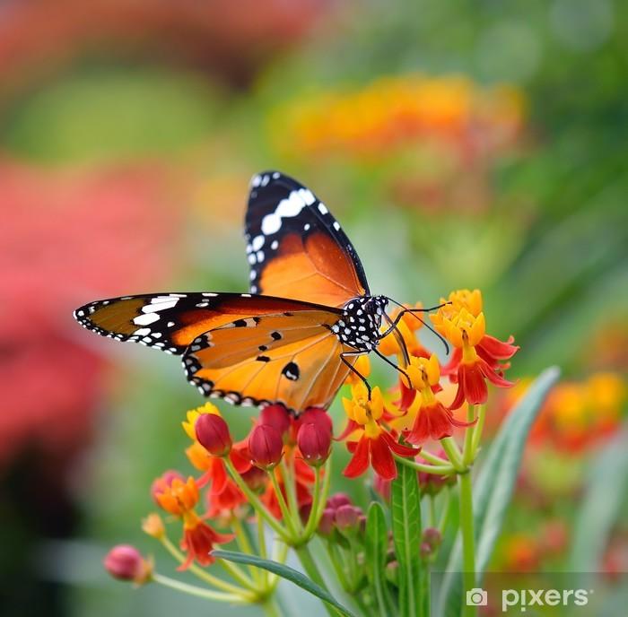 Plakát Motýl na květu pomeranče - Témata