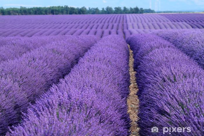 Nálepka Pixerstick Valensole provence francie levandulová pole s květinami - Roční období