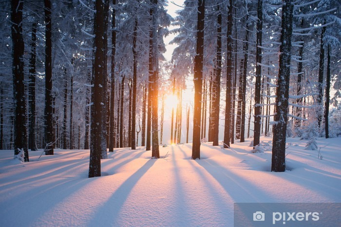 Fotomural Estándar Puesta del sol en el bosque en temporada de invierno -