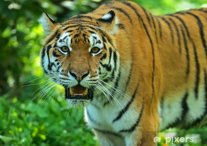 Papier peint vinyle Amur Tiger - Thèmes