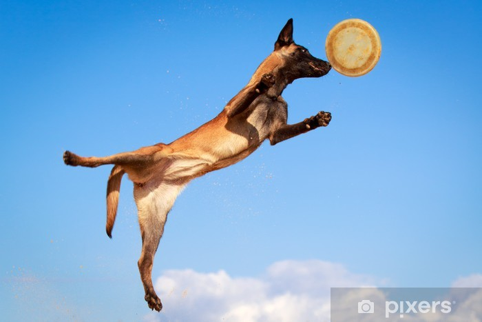 Aufkleber Belgischer Schäferhund Malinois Pixerstick