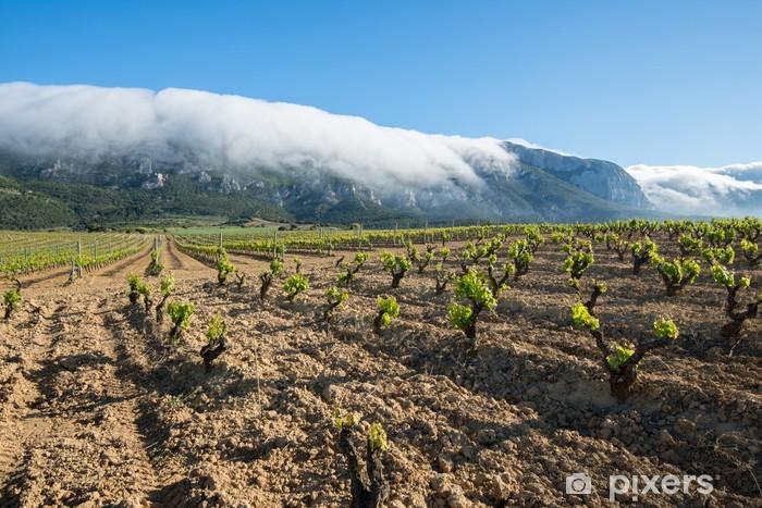 Vinylová fototapeta Vinice v Rioja Alava, Baskicko (Španělsko) - Vinylová fototapeta