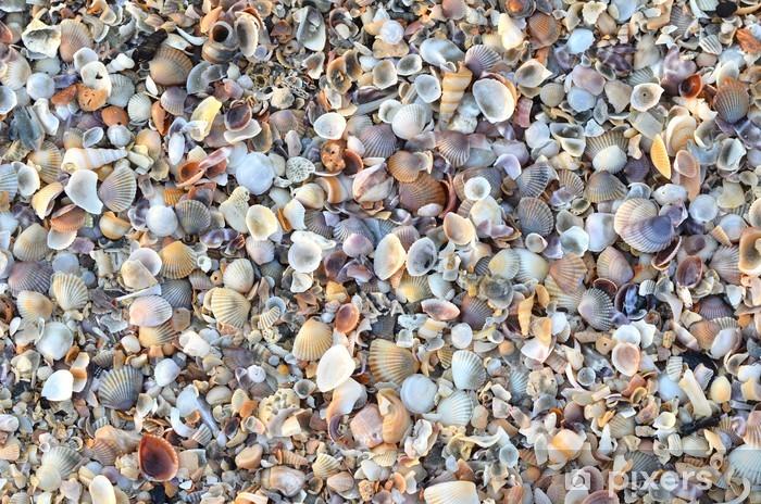 Vinyl Fotobehang Verscheidenheid van gebroken schelpen - Texturen