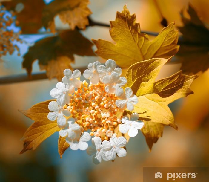 Plakat Kwitnie Viburnum - Rośliny