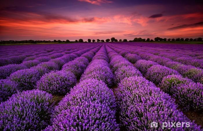 Pixerstick Sticker Prachtig landschap met een lavendelveld tijdens zonsondergang -