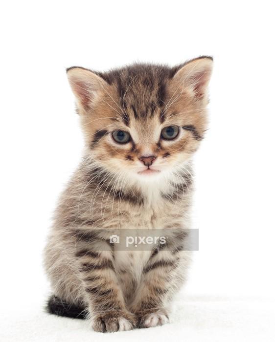 Muursticker Kleine kitten op witte achtergrond - Thema's
