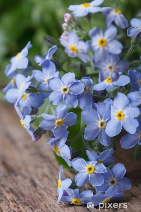 Sticker Pixerstick Bouquet de fleurs bleues forget-me-not. gros plan - Fleurs
