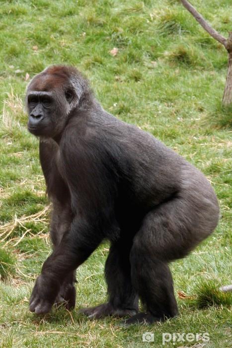 dc95668cf2333 Fototapete Weiblicher Gorilla • Pixers® - Wir leben