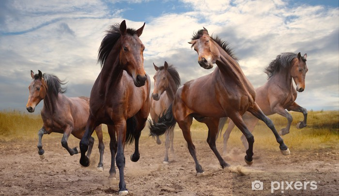 herd of horses Vinyl Wall Mural - horses