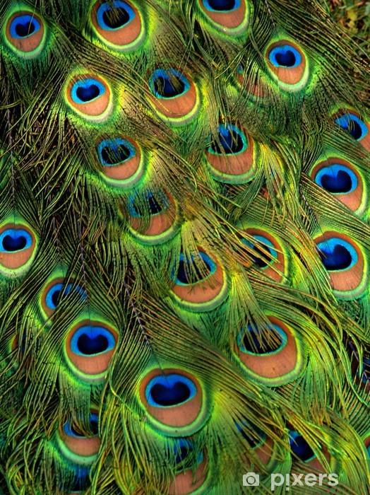 peacock Vinyl Wall Mural - Birds