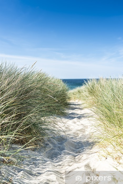 Fotomural Estándar Duna con hierba de la playa de primer plano. - Países Bajos