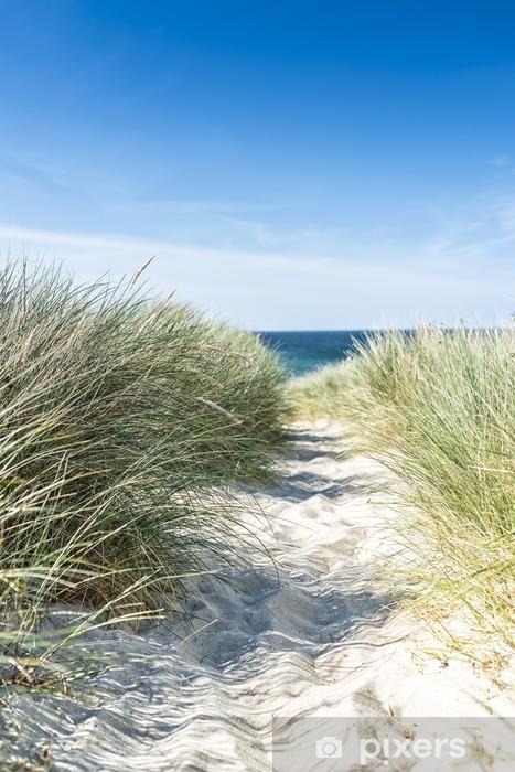Fototapeta winylowa Dune z plaży Trawa makro. - Holandia