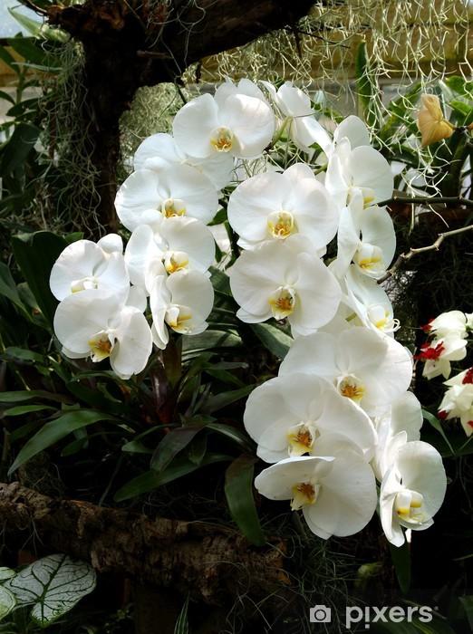 Fiori Orchidea Bianchi.Carta Da Parati Pianta Di Orchidea Con Fiori Bianchi Pixers