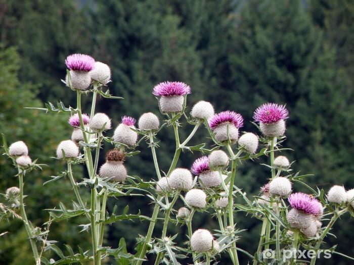 Fototapeta winylowa Oset, Słowacja - Kwiaty