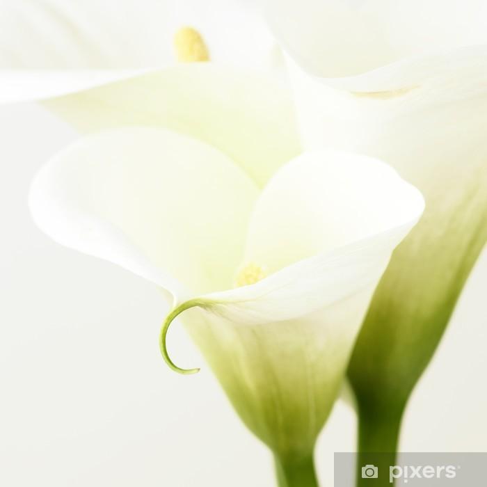 Vinyl-Fototapete Calla-Lilien - Blumen
