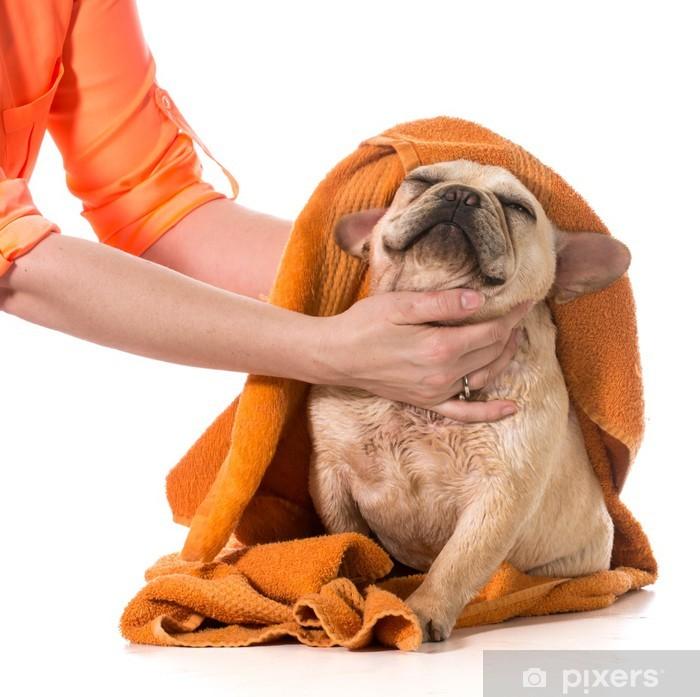 Plakat Dog grooming - Ssaki