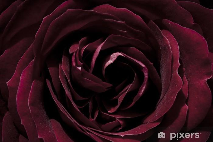 Naklejka Pixerstick Róża, ciemny czerwony, makro - Kwiaty