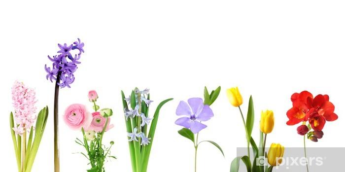 Pixerstick Sticker Verse lentebloemen geïsoleerd op wit - Bloemen