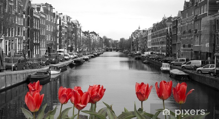 Naklejka Pixerstick Czerwone tulipany w Amsterdamie - Holandia