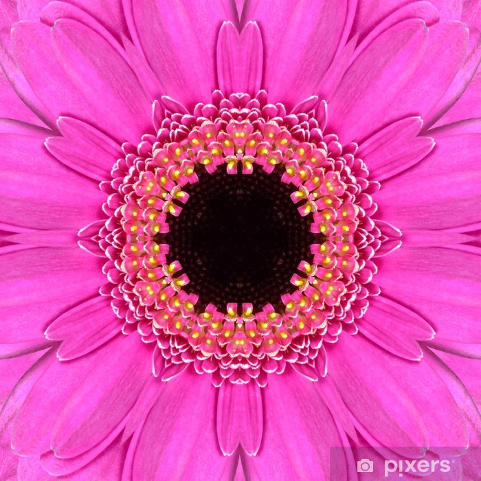 Vaaleanpunainen mandala concentric flower center kaleidoskooppi Pixerstick tarra - Kukat