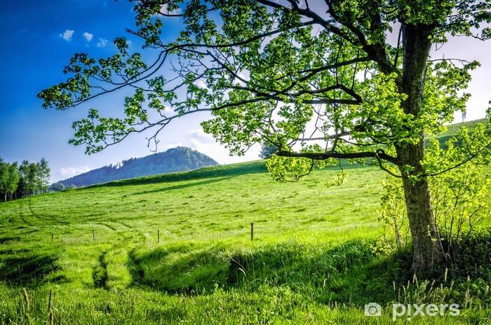 Naklejka Pixerstick Widok na górę dzikowiec - Europa