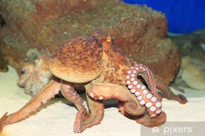 Naklejka Pixerstick Wspólne ośmiornicy (Octopus vulgaris) w Japonii - Zwierzęta żyjące pod wodą
