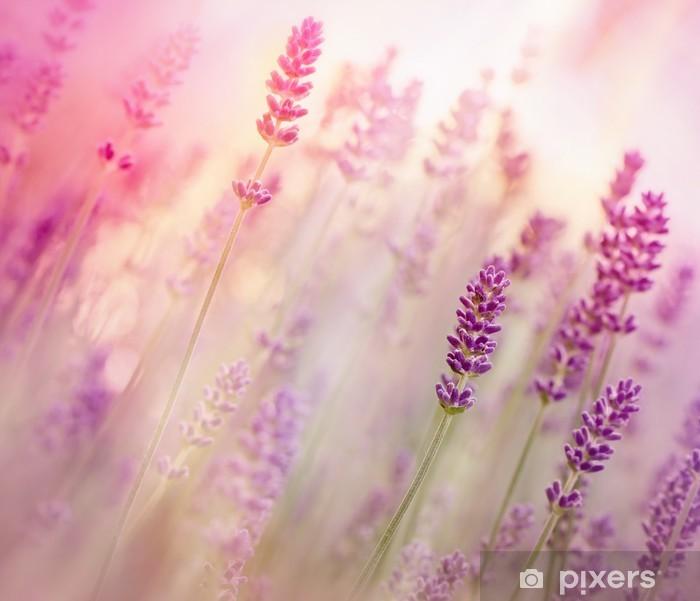 Fototapeta winylowa Piękne lawendy w ogrodzie kwiatowym - Tematy