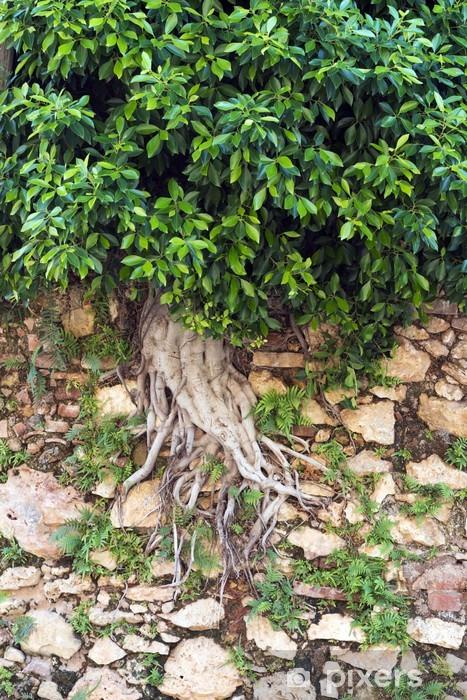 Nálepka Pixerstick Strom v zdi - Stromy