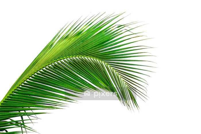 leaves of palm tree isolated on white background Wall Decal - Wall decals