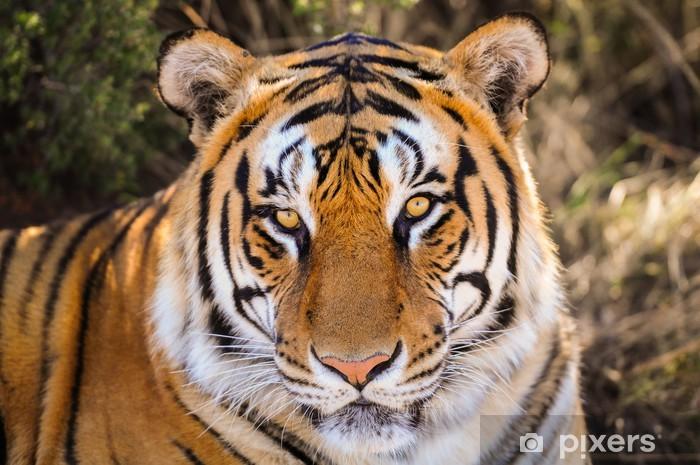Sticker Pixerstick Gros plan Portrait d'un tigre - Thèmes