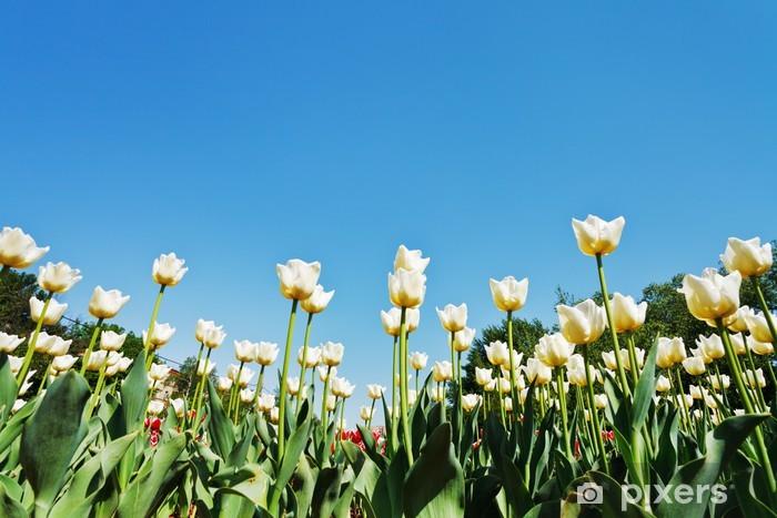 Papier peint vinyle Tulipes ornementales sur plantation de fleurs sur fond de ciel bleu - Saisons