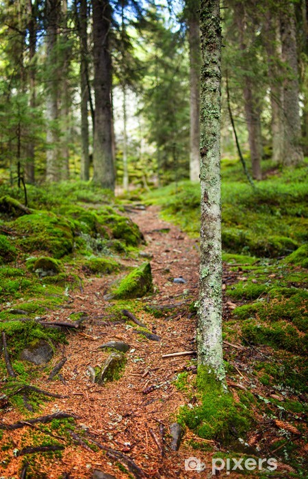 Vinyl-Fototapete Fußweg durch einen Kiefernwald - Berge