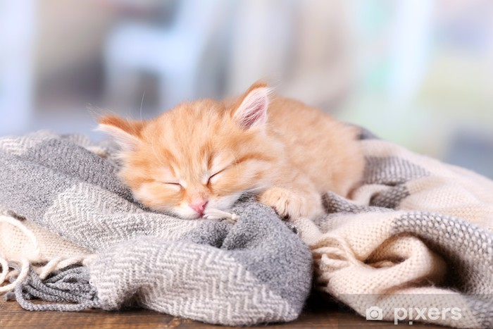 fdc3568c1f34 Cute little red kitten sleeping Wall Mural • Pixers® • We live to change