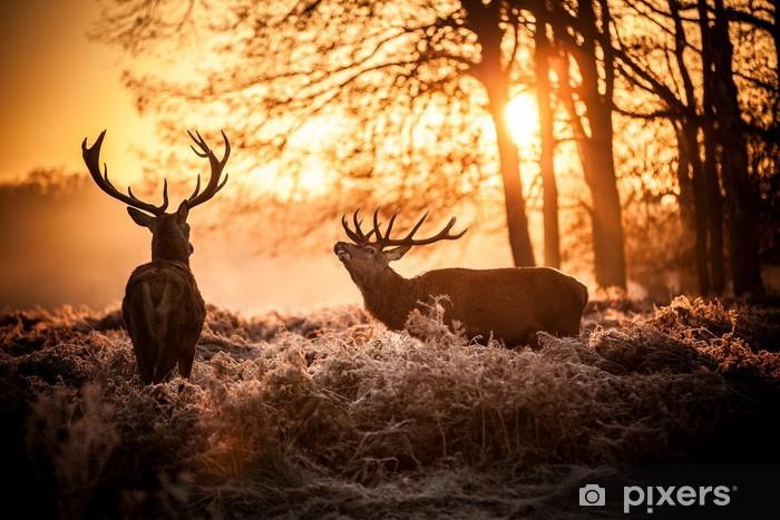 Papier peint vinyle Red Deer au soleil du matin. - Styles