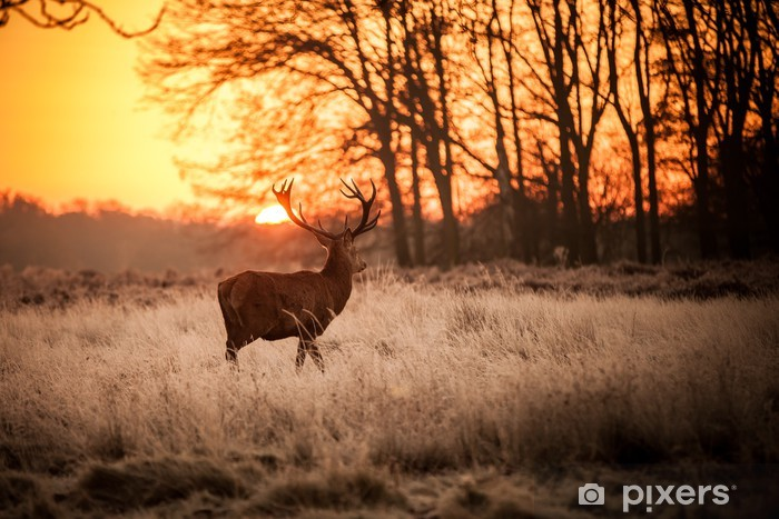 Red Deer in Morning Sun. Self-Adhesive Wall Mural - Themes