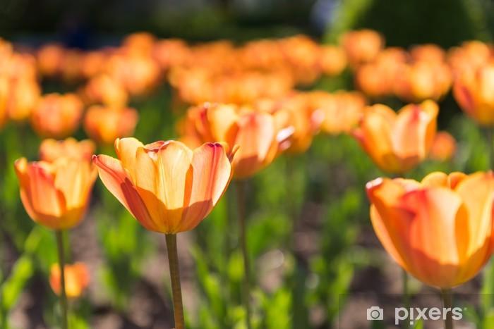 Papier peint vinyle Champ de tulipes - Maisons et jardins