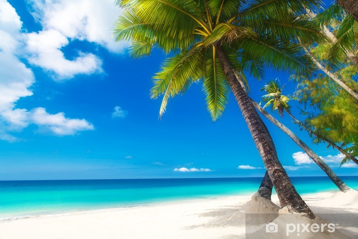 Dream scene. Beautiful palm tree over white sand beach. Summer n Pixerstick Sticker - Palm trees
