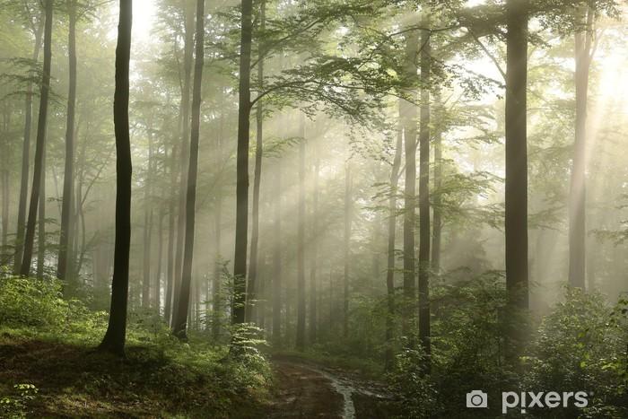 Naklejka Pixerstick Wschód słońca w wiosennym bukowym lesie - Tematy