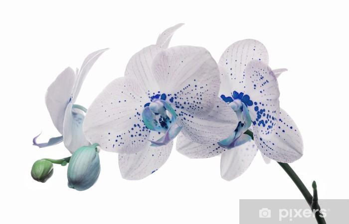 Sticker Pixerstick Fleurs d'orchidées avec de grandes et de petites taches bleues - Fleurs